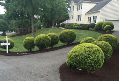 Shrub & Tree Pruning & Trimming