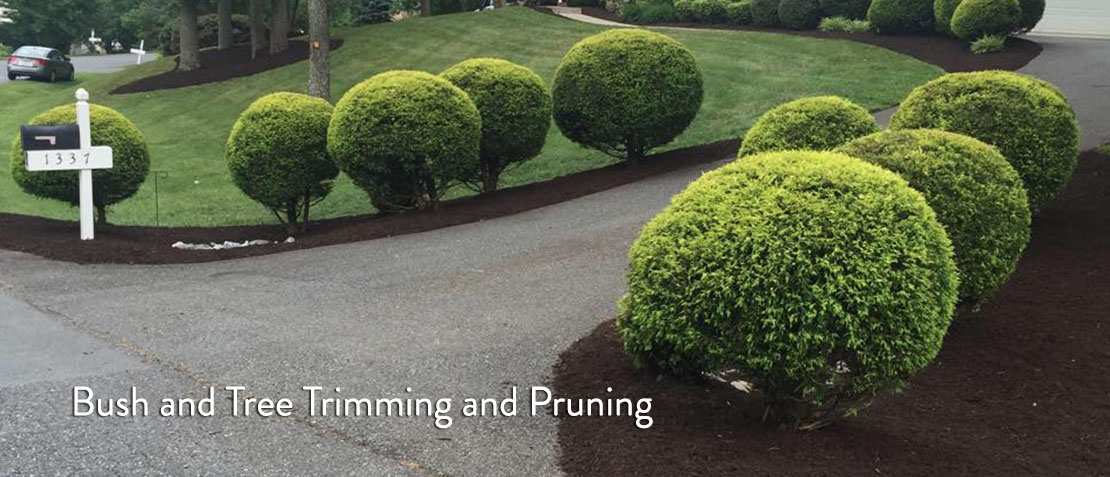 Bush and Tree Trimming and Pruning